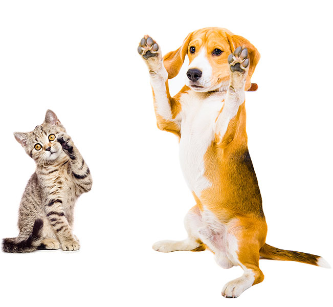 The Clear Choice... for Your Pet's Healthy Joints